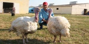 Начинающие фермеры получили областные гранты