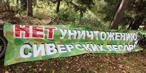 Сиверский лес: незаконная продажа леса
