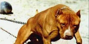 Уголовная ответственность для владельцев собак