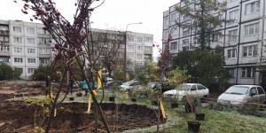 Около полусотни жителей Гатчины высадили деревья в своем дворе