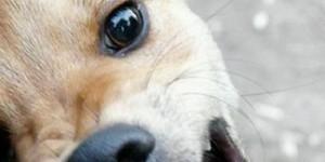 Опасная собака в центре Гатчины: будьте осторожны!