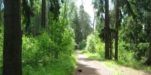 Суд признал незаконной продажу участка в Сиверском лесу Ленобласти