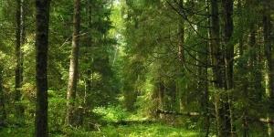 По факту незаконной рубки леса вынесен обвинительный приговор